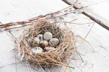 Colorful Easter quail Eggs with willow twigs on the white rustic wooden background in nest