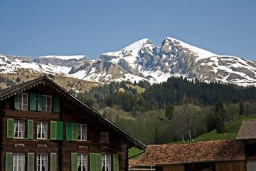 Schwarzhorn mountain. High in the Grindelwald valley.
