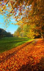 On the autumnal way