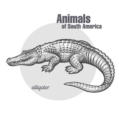 Animals of South America Caiman.