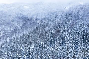 winter landscape at Zao mountain