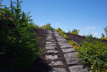 登山道の風景