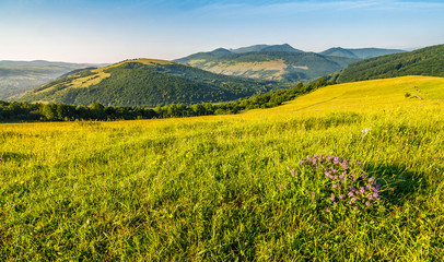 wild flowers on rural hillside