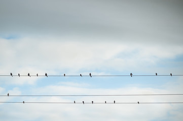 Low angle view of silhouette birds perching on cable