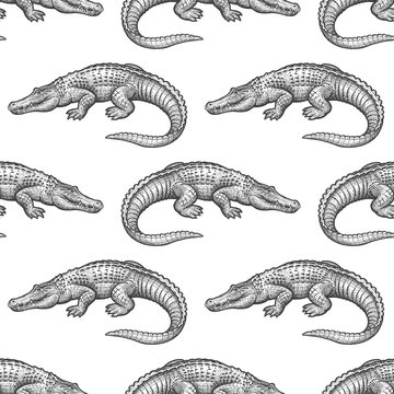 Seamless pattern with Caiman.