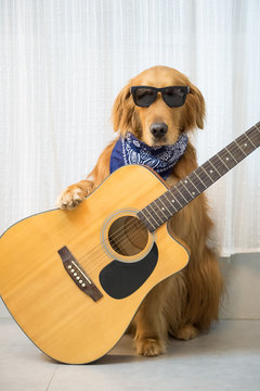 Golden Retriever and guitar