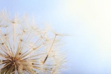 Dandelion seed blowing away against blue sky