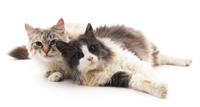 Two cats lying.