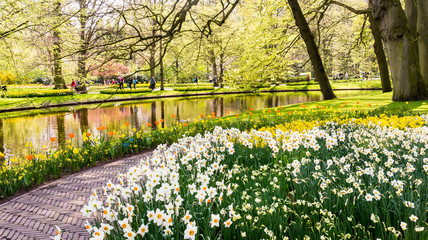 Photo on textile frame Narcissus Daffodils in Dutch public Spring flower Garden Keukenhof Lisse, Zuid Holland, NLD