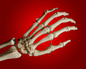 Study model of a skeleton of a human hand, red background
