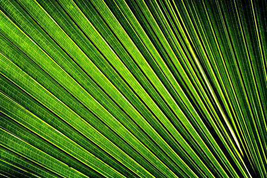 green background with banana leaf