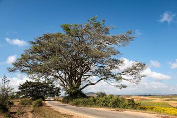 Myanmar  - Burma - Fahrt von Heho nach Pindaya