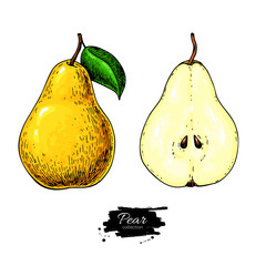 Pear vector drawing. Isolated hand drawn full pear and sliced pieces set. Summer fruit artisitc style