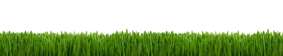 Gras Textur als Hintergrund Panorama