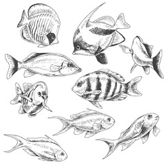 Reef Fishes Set