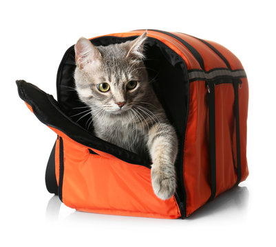 Cat in carrier bag on white background