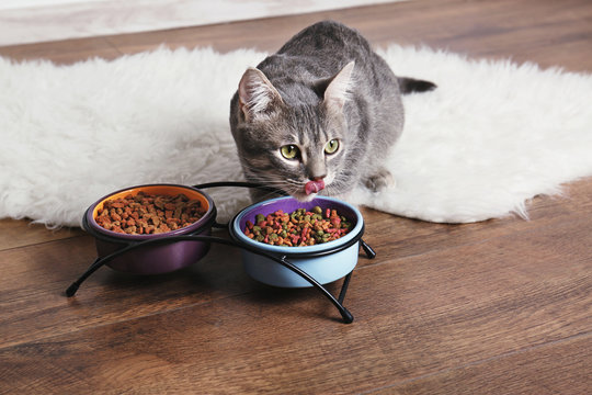 Cute cat eating on floor at home