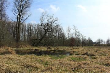 Feuchte Landschaft im Frühjahr