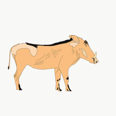 Portrait of a warthog, side view, hand drawn vector illustration isolated on white background