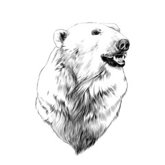 the head of the polar bear, profile, looking to the side, sketch graphics vector black and white drawing