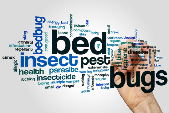 Bed bugs word cloud concept on grey background