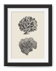retro vector illustration: vintage drawing / engraving of two beautiful sea corals - nautical wall art or graphic design element for all beach and summer related print projects