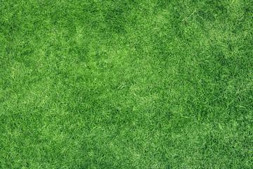 Green grass texture Wall mural