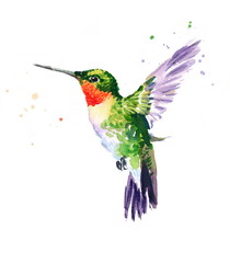 Watercolor Bird Hummingbird Flying Hand Drawn Summer Garden Illustration isolated on white background