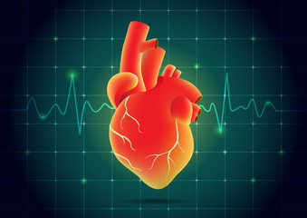 Human heart red color on pulse monitor background. Illustration about health and medical.