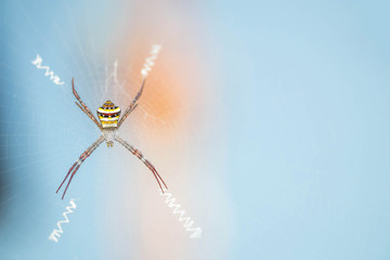 Closeup colorful spider on cobweb with copy space