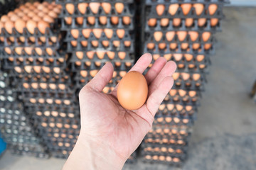 Hand holding eggs from chicken farm on lot of egg in the package background..