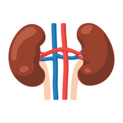 Kidneys anatomy icon