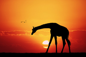 giraffe in African landscape at sunset