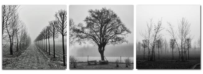 triptych - trees in morning fog - monochrom Wall mural