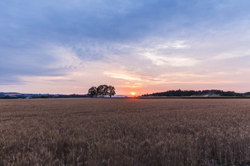 Colorful Sunset in Rural Farm Land