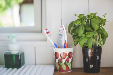 Toothbrush holder by houseplant on shelf against white wall in bathroom