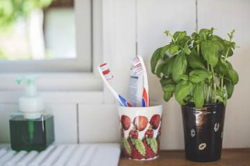 Toothbrush holder by houseplant on shelf against white wall in bathroom