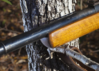 Wood stocked rifle on a branch