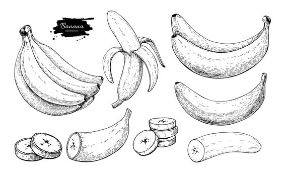 Banana set vector drawing. Isolated hand drawn bunch, peel banana and sliced pieces. Summer fruit engraved style