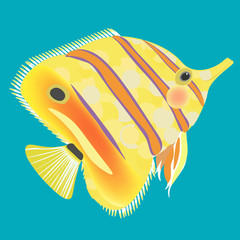 butterflyfish the fish a yellow.  illustration