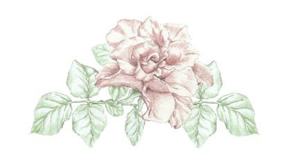 Rose flower twig