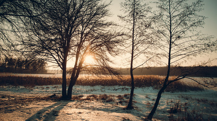 Winter landscape - frosty forest in the sunny evening. Tranquil winter nature in sunlight. Beautiful winter landscape at sunset with fog and snow