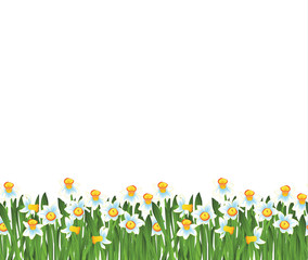 Green grass with small blue narcissus flowers isolated on white. Vector illustration