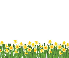 Green grass with small yellow narcissus flowers isolated on white. Vector illustration