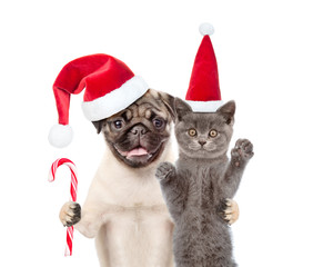Pug puppy with christmas candy cane embracing scottish cat in red santa hat. isolated on white background