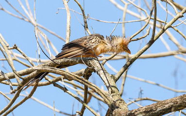 Bird with ruffled feathers on a tree branch