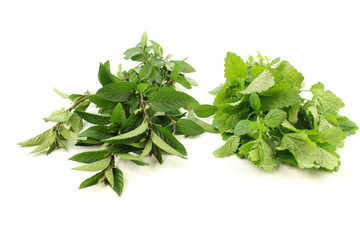 Mint and melissa isolated on white background