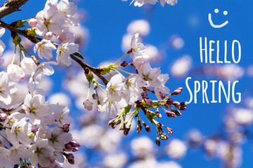 hello spring  message with a beautiful cherry blossoms  background.