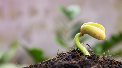 plant and seed to tree