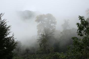 Cloud Forest of Boquete, Panama